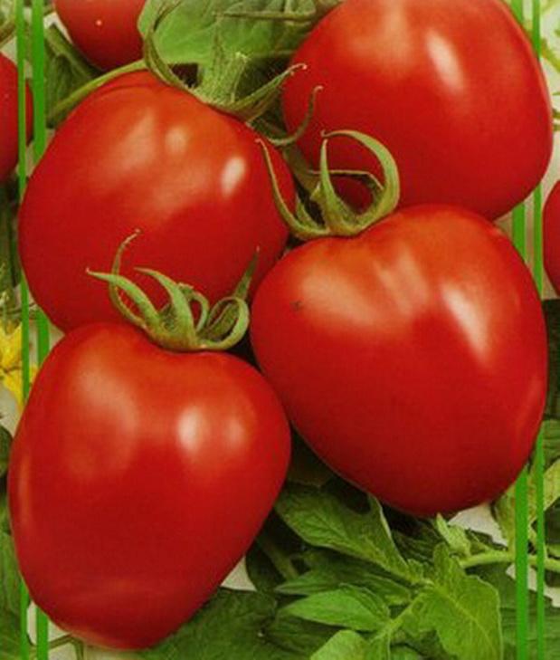 Растение устойчиво к растрескиванию, выдерживает перепады температур.