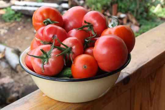каталог томатов с фото и описанием