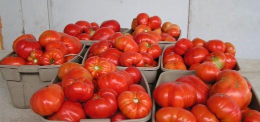 Томат буденовка отзывы фото урожайность