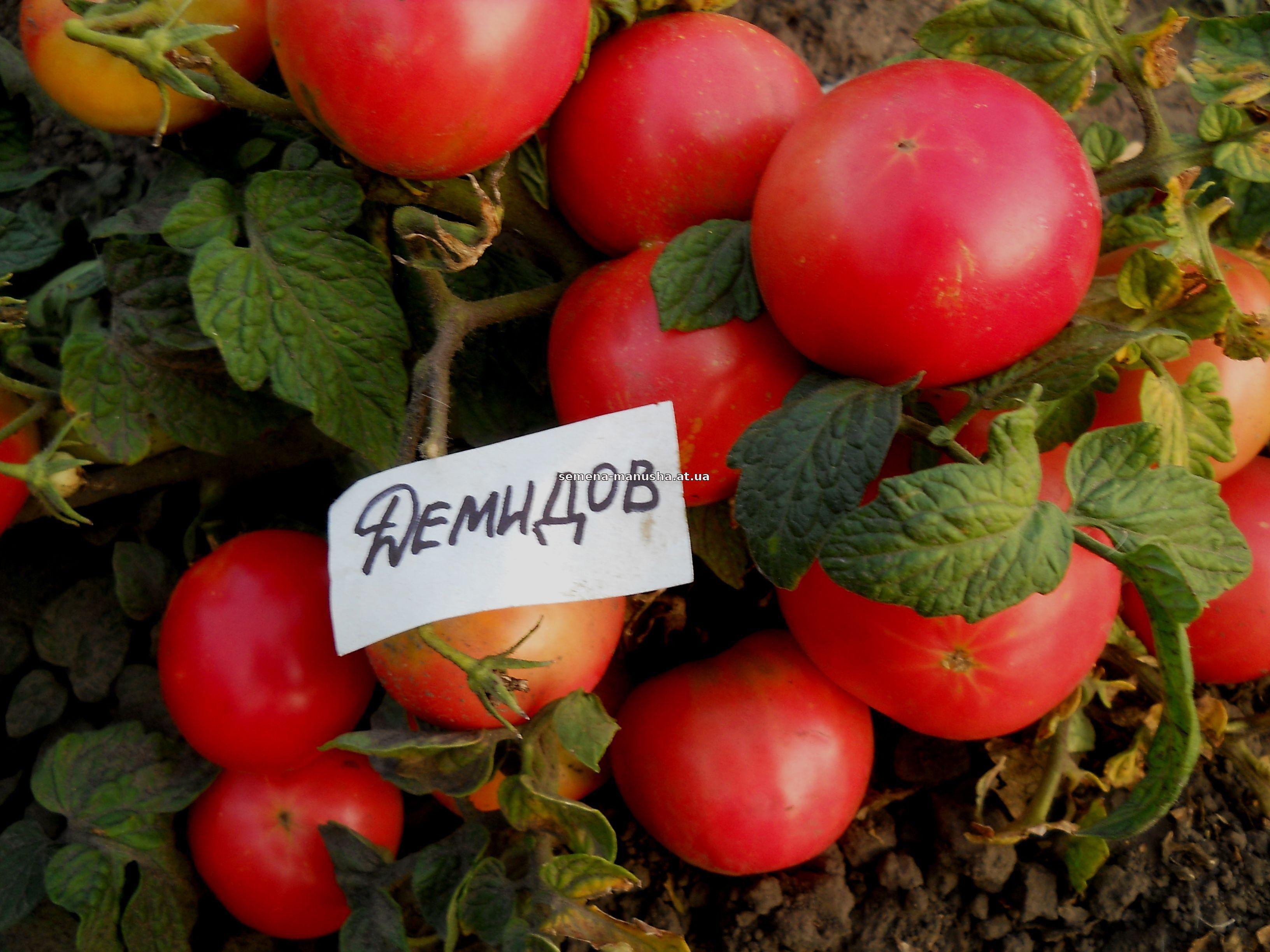 """Отзыв о Семена томата Сибирский сад """"Лопатинские"""" Сорт радует 69"""