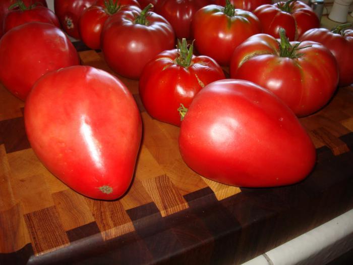 томаты мазарини отзывы фото