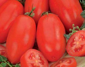 tomat-chelnok-e1472476354292-500x393