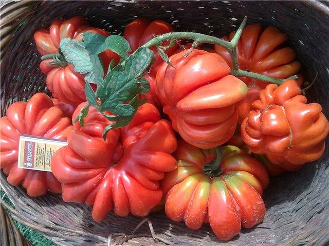 томат американский ребристый характеристика и описание сорта