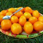 томат чудо света характеристика и описание сорта