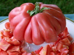 Томат пузата хата описание сорта помидоров
