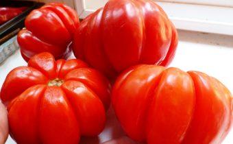 томат пузата хата отзывы фото урожайность