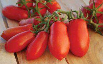 томат дамские пальчики характеристика и описание сорта