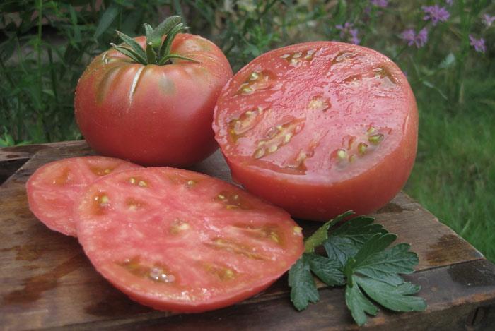 томат микадо розовый характеристика и описание сорта