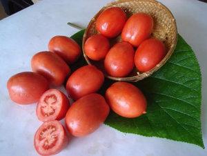 томат новичок характеристика и описание сорта