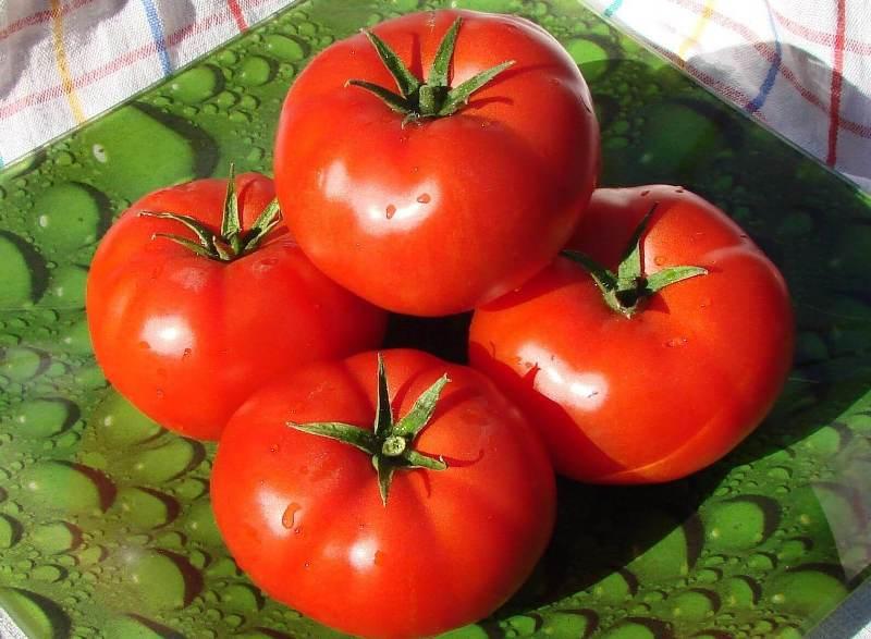томат бобкат характеристика и описание сорта