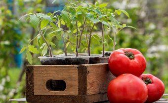 когда сажать помидоры на рассаду в 2018 году для теплицы по лунному календарю?