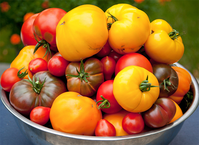 сорт помидор дана