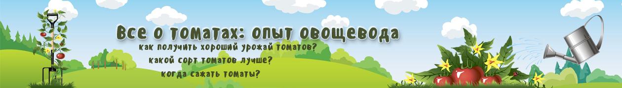Логотип сайта Все о томатах. Выращивание томатов. Сорта и рассада.