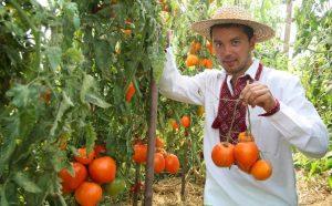 Томат Немецкая красная клубника: описание сорта, отзыв, фото