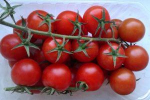 Томат Синяя гроздь характеристика и описание сорта урожайность с фото