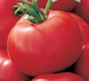 Сорта помидор для пермского края