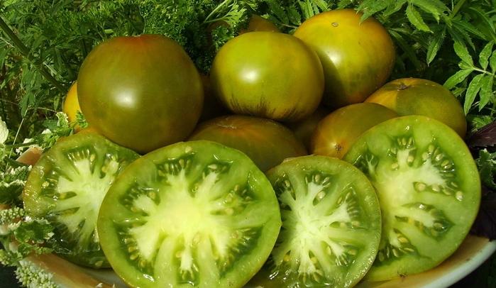 Томат Изумрудное яблоко характеристика и описание сорта урожайность с фото