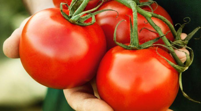 Томат Настена характеристика и описание сорта урожайность с фото