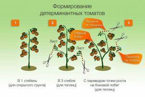 формирование куста детерминантных томатов