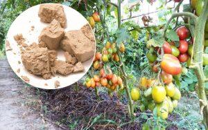 Дрожжевые подкормки для помидор