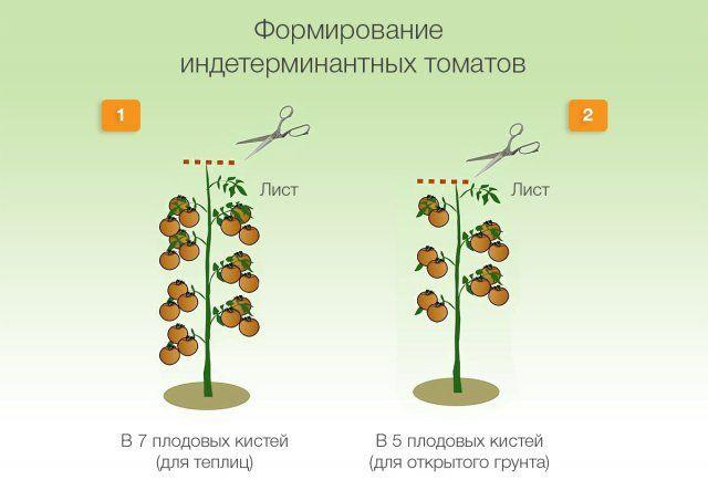 Формирование индетерминантных томатов
