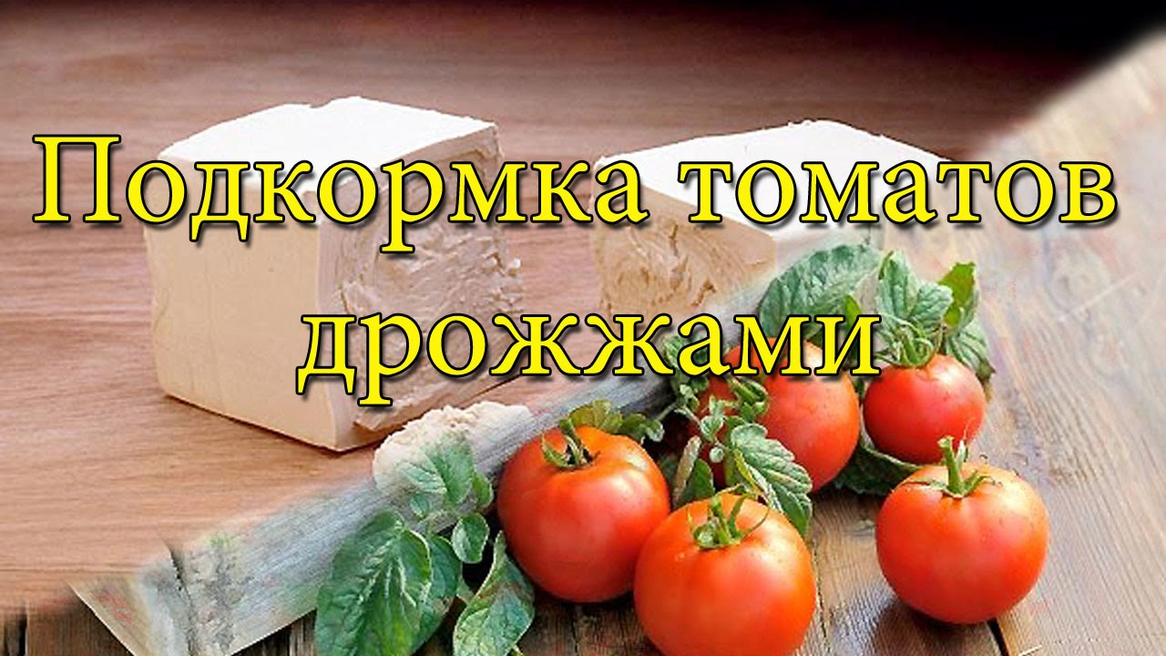 Удобрения с кальцием для томатов