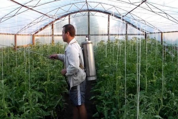 обработка семян орданом