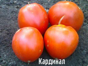 помидоры, сорт кардинал