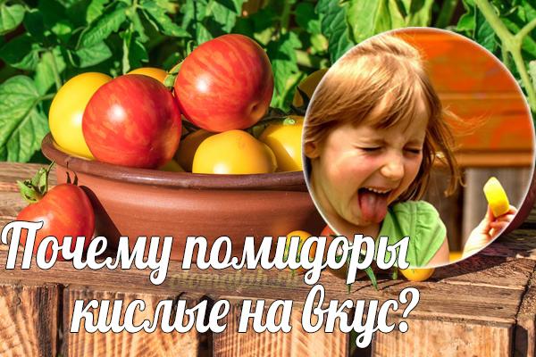 Почему помидоры кислые на вкус что делать?