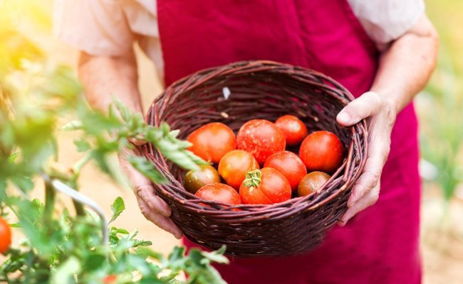 Чтобы помидоры были крупными