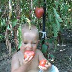ребенок кушает томат