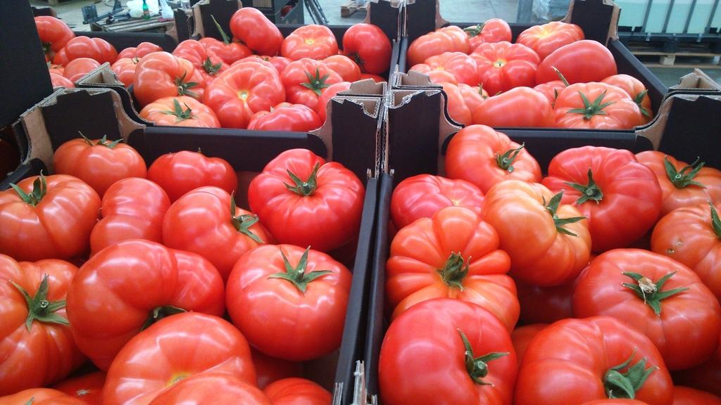 картонный вкус у помидор