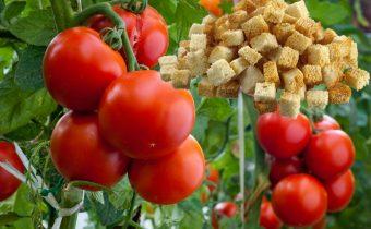сухари для помидоров