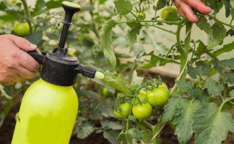 Обработка томатов трихополом