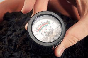 Как определить кислотность почвы по сорнякам и еще 7 вопросов об удобрении огорода. Как определить pH почвы и какими удобрениями корректировать ее