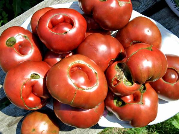 помидоры уродливые