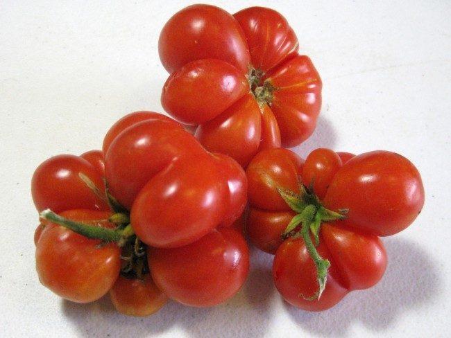томаты Рейсетомейт