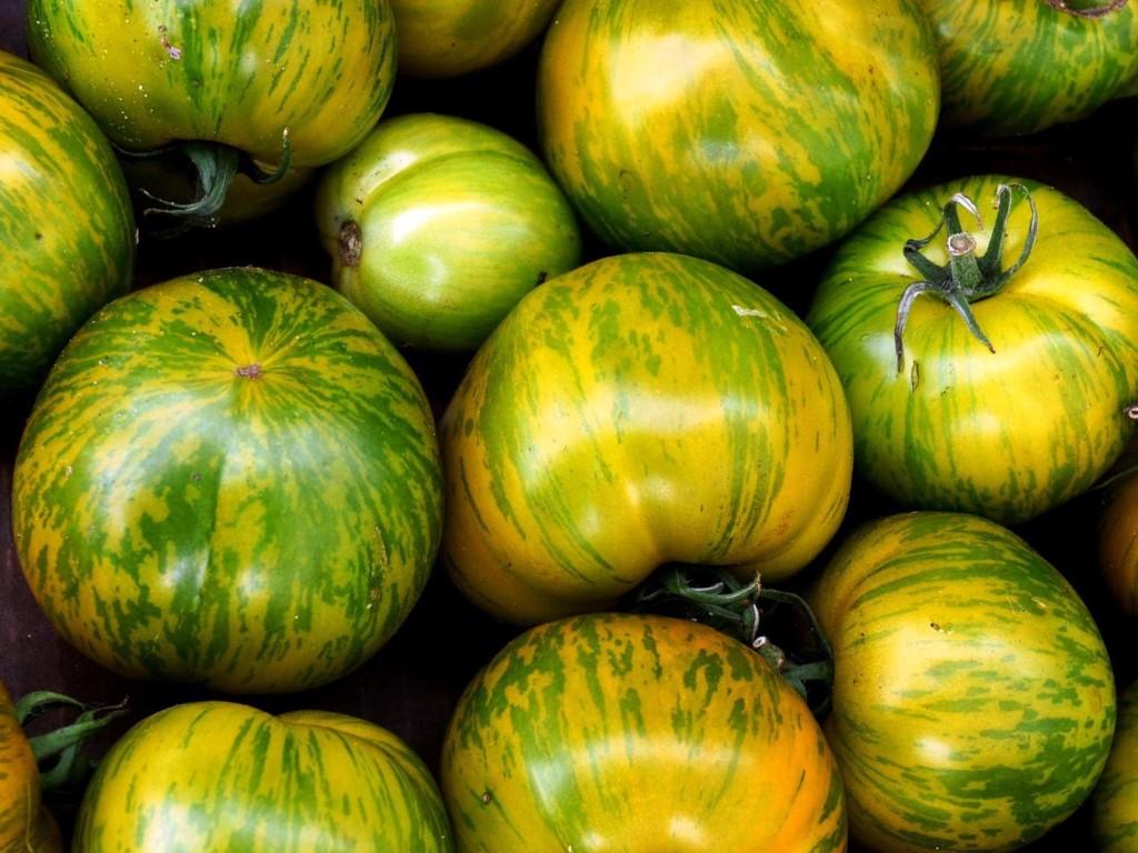 Зеленые сорта томатов