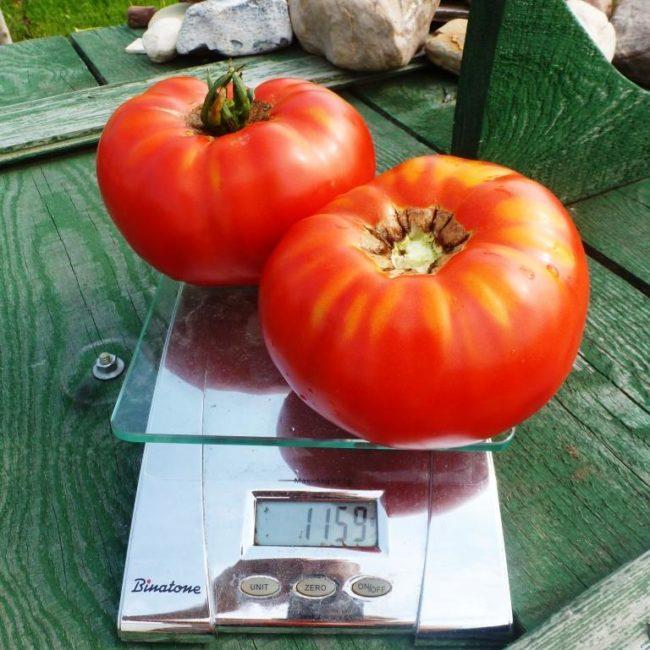 томат гигант делишес