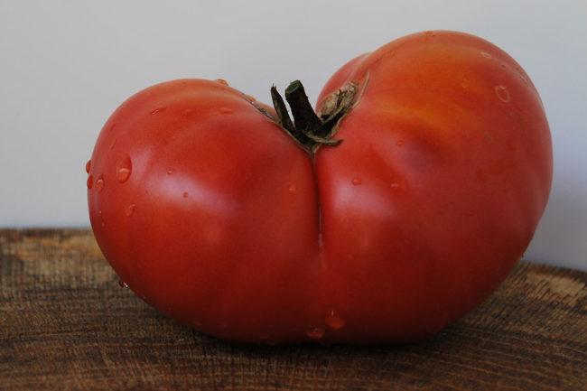сладкий сорт томата
