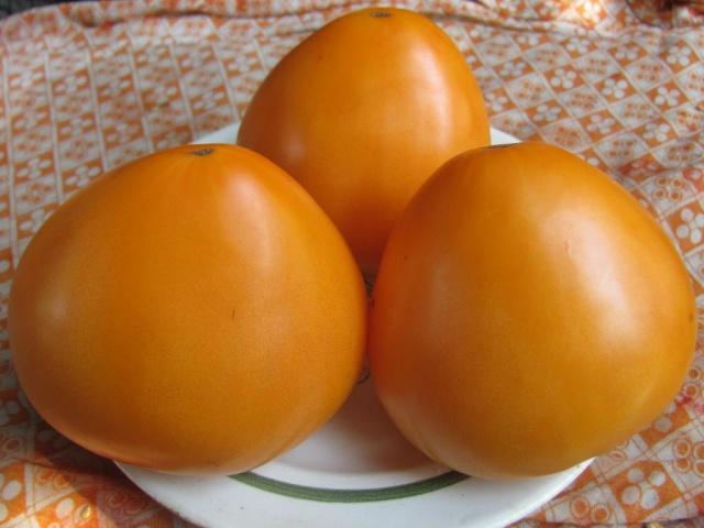томат золотые купола
