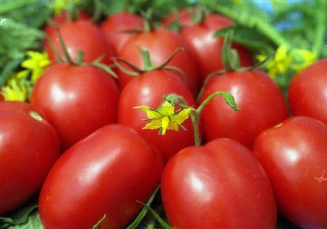томат ракета