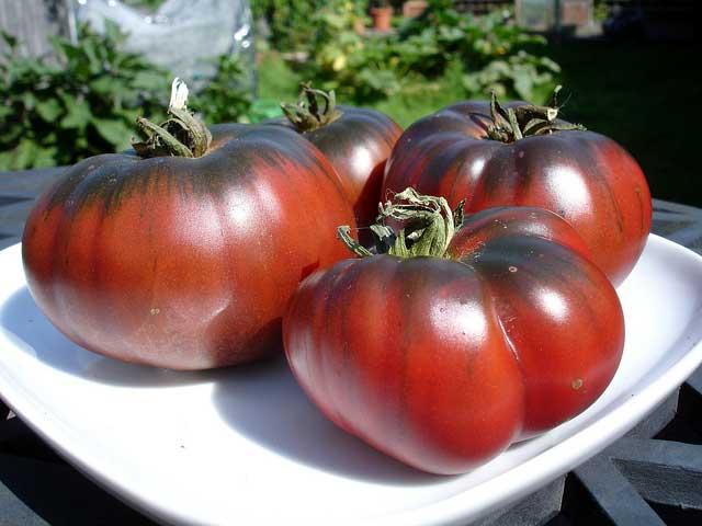 томат углерод
