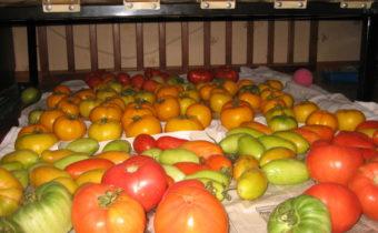 хранение помидор