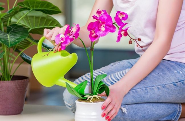 Перекись водорода для орхидеи