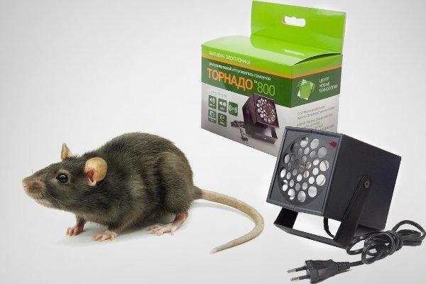 Завелись крысы в курятнике что делать