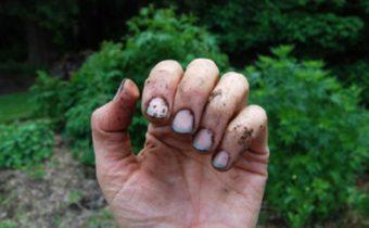 под ногти забилась земля