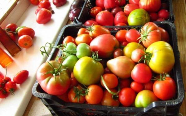 pomidor-na dozrevanii
