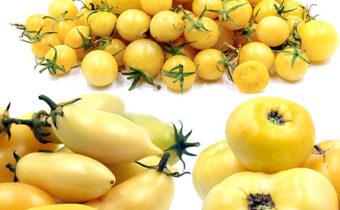 beloplodnye tomaty