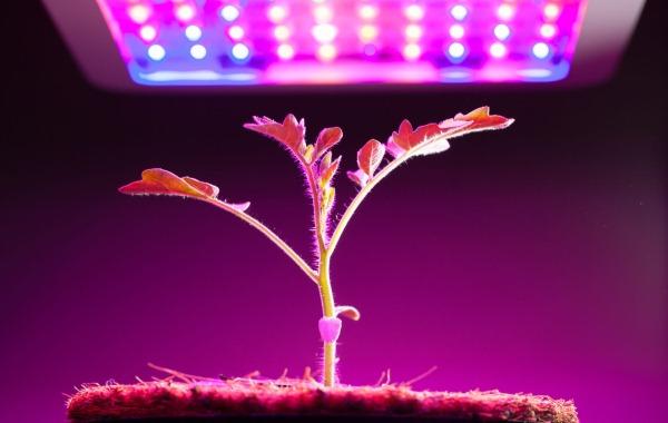lampy-dlya-rastenij-raznovidnosti-i-sovety-po-vyboru
